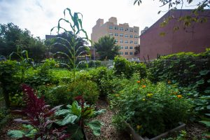 Community garden in the Bronx