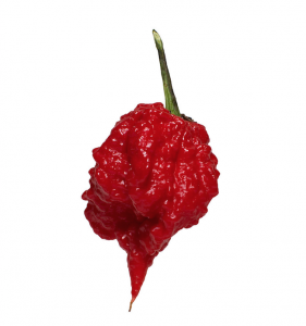 The 7 Pot Primo is the world's 4th spiciest pepper