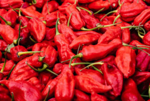 Some juicy, red ghost peppers.