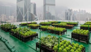 Urban Farm in Hong Kong