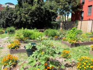 Organic farming in a community garden