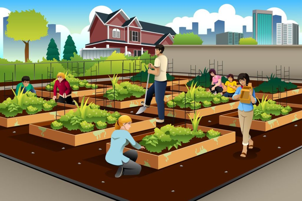Urban Farm vs. Community Garden