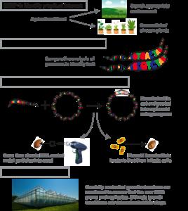 Process for GMO
