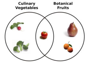Culinary vs Botanical classifications of fruits and vegetables.